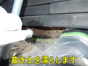4葺き土を濡らす