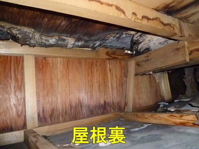 屋根点検:屋根裏